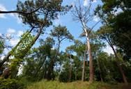 Visite guidée - La Forêt du Touquet : un habitat en constante évolution