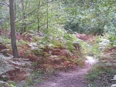 Bois de Roquelaure