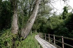 Le Marais  de Cambrin