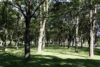 Place plantée de la Cité 5 de Grenay