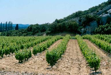 Cave des vignerons Le Gairidel