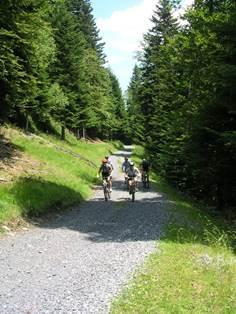 Route Forestière de Ravi