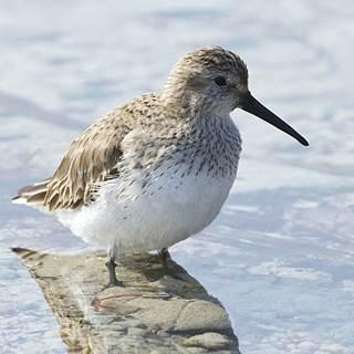Concours Photos : Les Oiseaux du Golfe