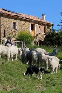 Mohair de la Pastourelle