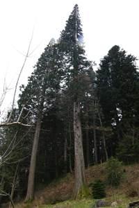 Arboretum de Cazebonne
