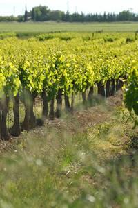 Balade vigne et vin à Gaujac et au château de Marjolet