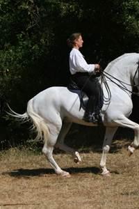 Les chevaux de Regagnas