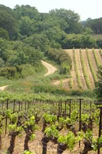 Vélos Vignes Tour