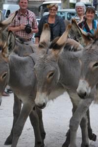 Journées nationales de l'âne de provence