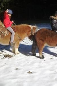 Stage de poneys pour enfants, à la ferme