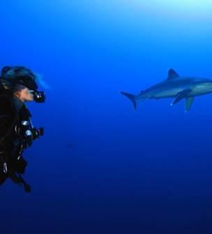 Amédée Diving Club