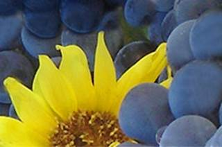 Winery plus tours