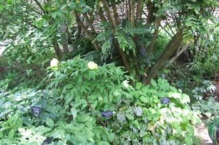 Jardins potagers du Temple