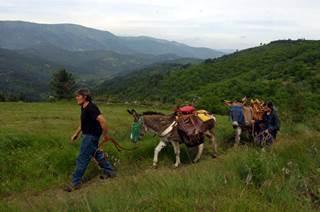 Les ânes des Collinettes