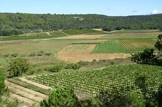 Les Vins du Duché d'Uzès (AOC)