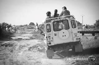 Safari 4x4 Camargue sauvage