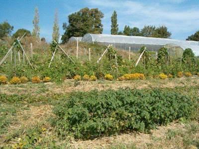 Initiation au jardinage BIO en Volvestre