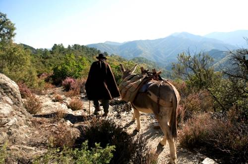 Voyage avec un âne en Cévennes ©