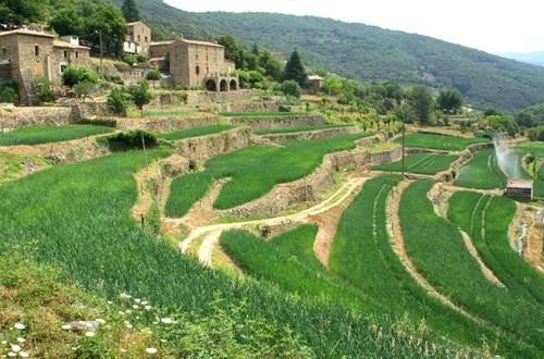 Cévennes-terrasses d'oignons ©