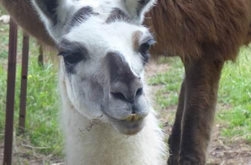 Causses et Lamas 1 ©