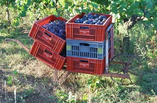 Domaine des Vignes Rouges producteur de vins ©