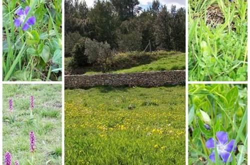 Domaine d'Escattes - Jardin Meli melo ©