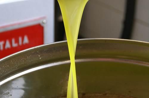 L'huile d'olive au moulin ©
