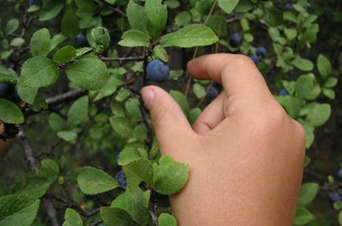 Secrets des arbres ©