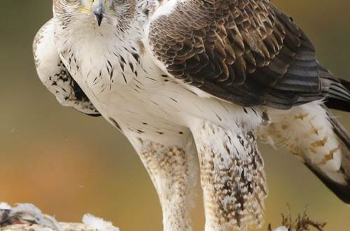 Alphabet de la Biodiversité © GT