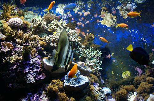 Aquarium ©