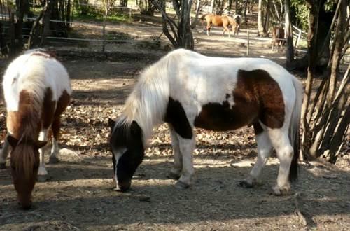 poney-les-ecuries-de-molhes ©