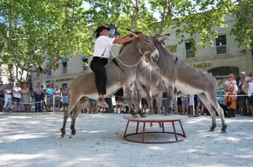 Championnat de france Ane de Provence - 2 © copyright :