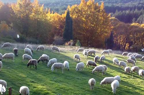 Moutons ©