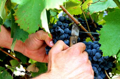 Cave St Maurice vins ©