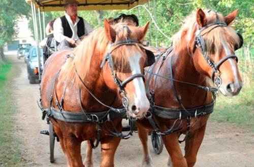 camargue chariot ©