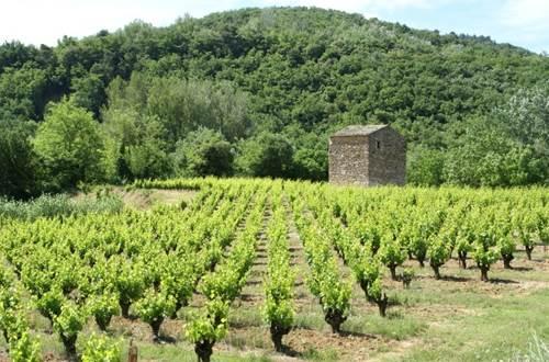Vignoble des Côtes du Rhône ©