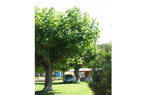 aire-naturelle-camping-clos-abbaye-cendras ©