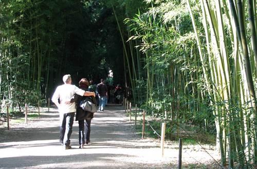 Bambouseraie ©