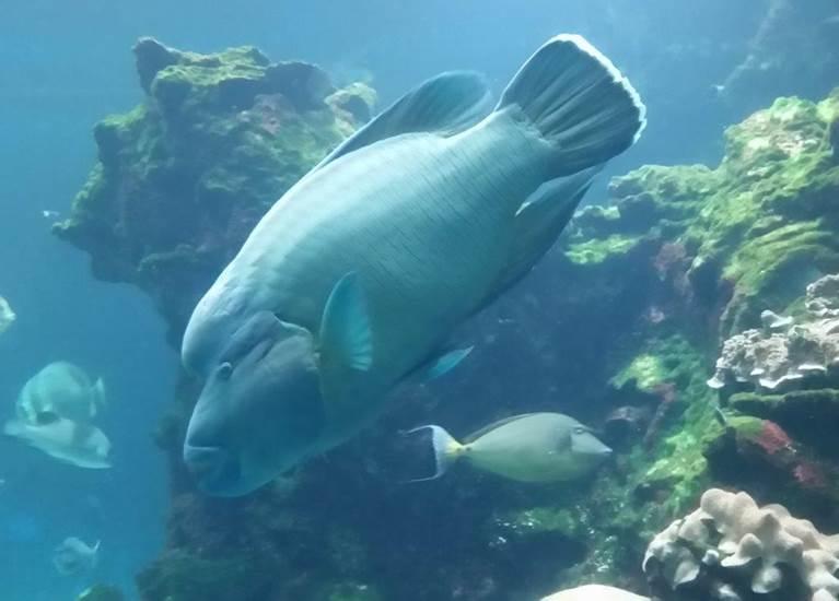 Visite aquarium des lagons