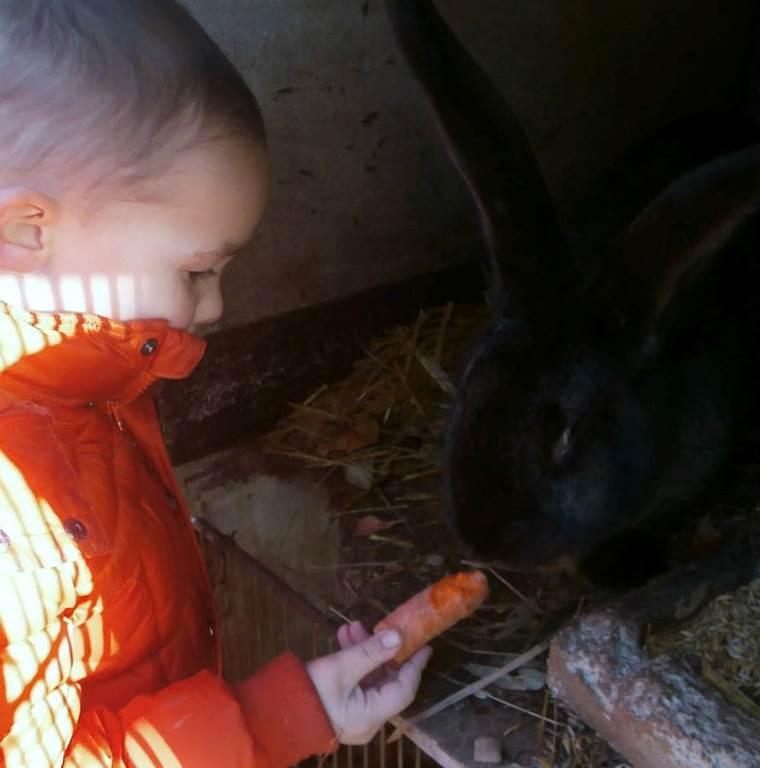 visite des lapins